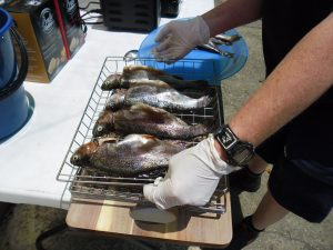 trout ready for smoking
